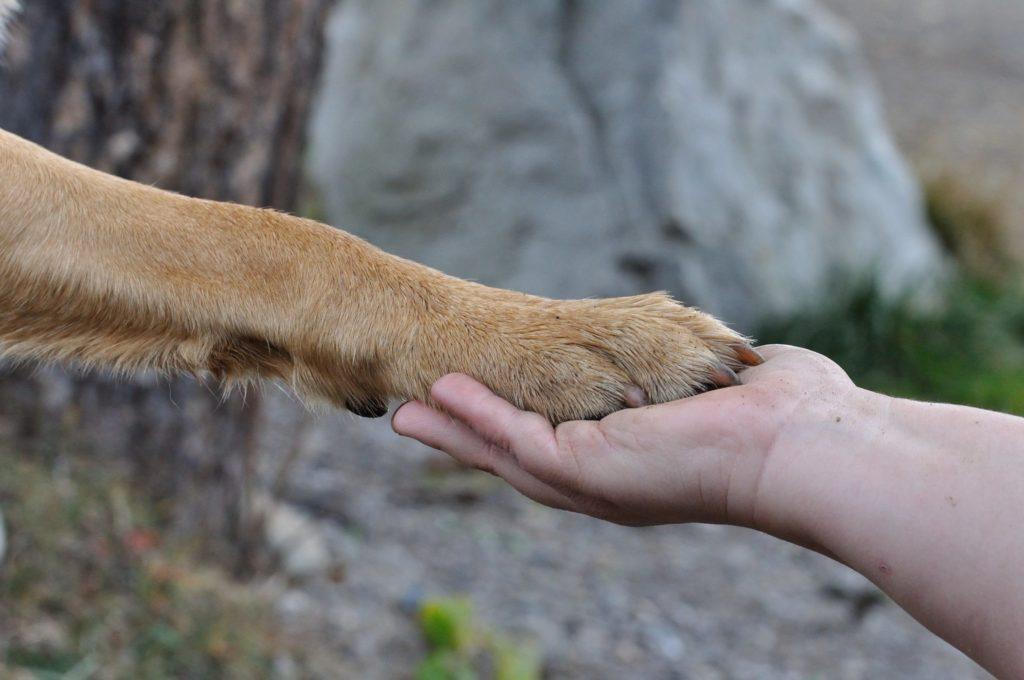 Hundetrainer gesucht