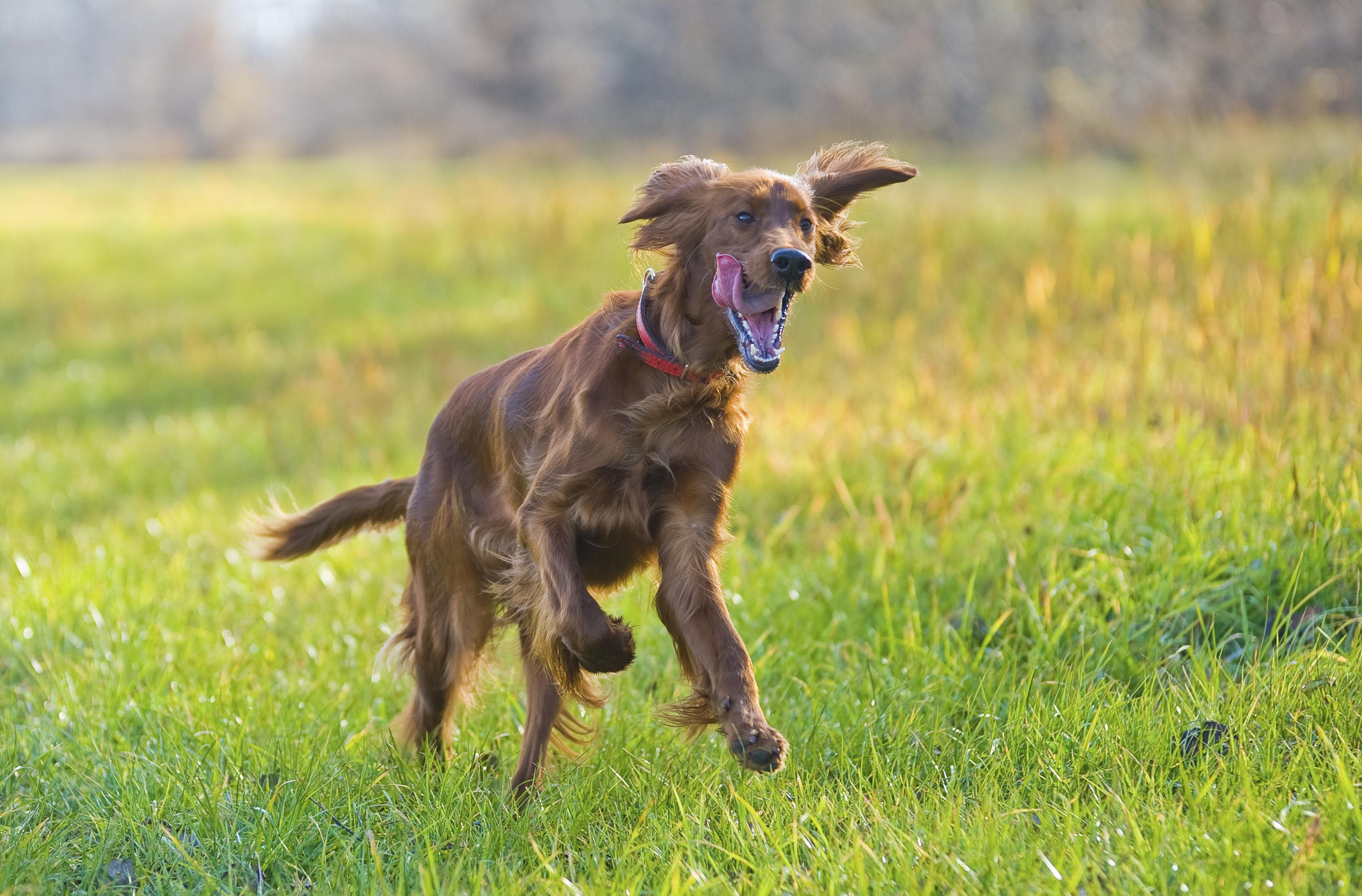 Junghund Förderung