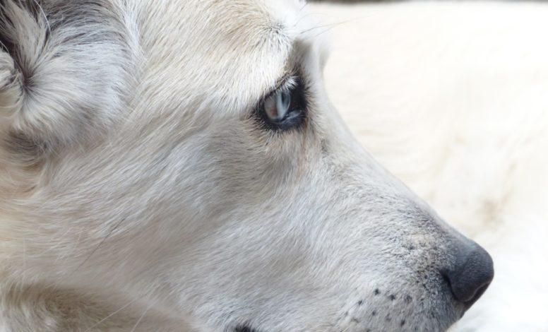 Hilfe bei Angst beim Hund