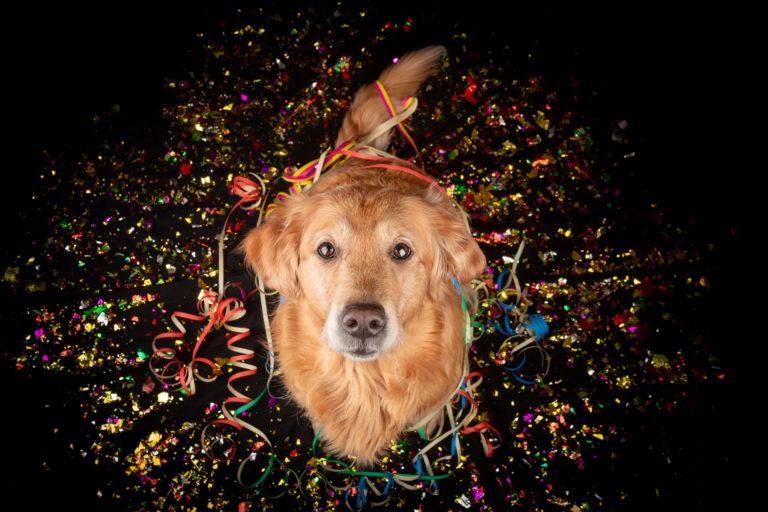 Hundefälle Silvester Hund