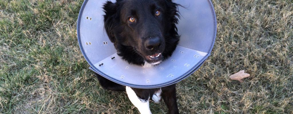 Hundefälle Erste-Hilfe-Kurs