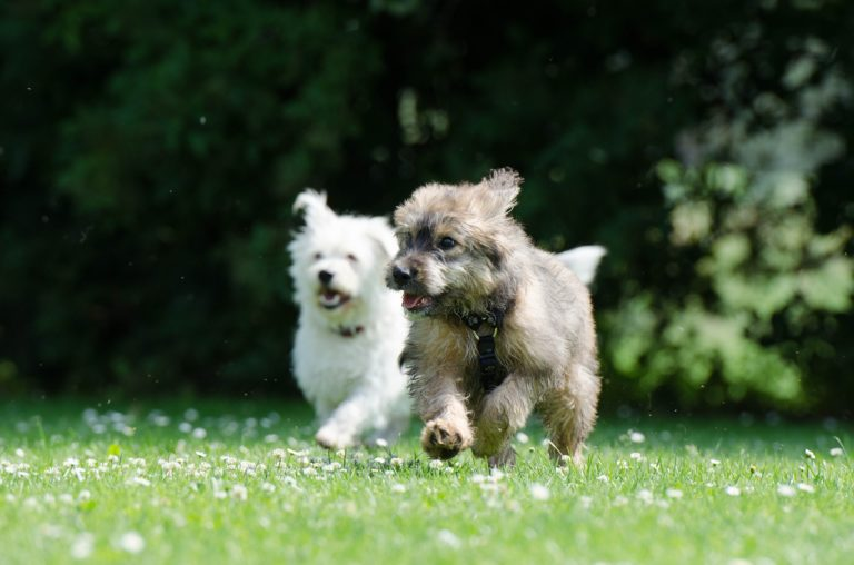 Hundefälle Blog - Zweithund - Teil 4