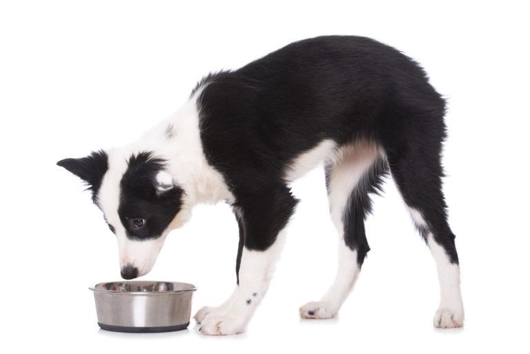 Hund Futterschüssel Hundefälle
