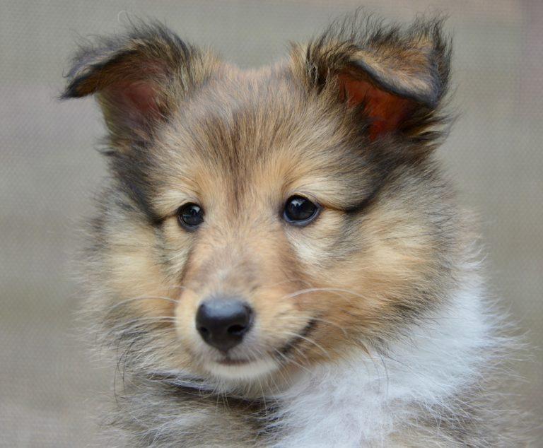 Hundefälle - Sozialisierung oder Traumatisierung?!