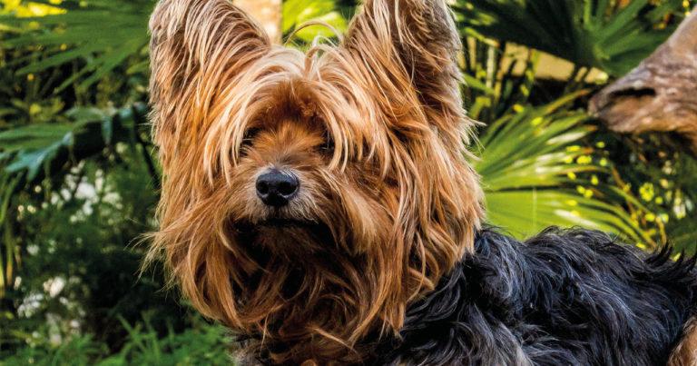 Hundefälle Blog - Haare raus aus den Augen