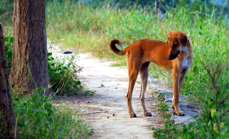 Hundefälle Blog Sozialverträglich