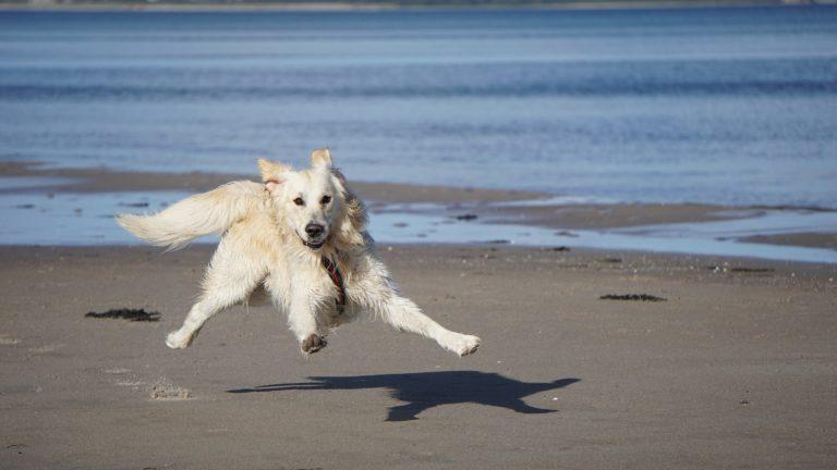 Hundefälle - Der Hund und der Urlaub