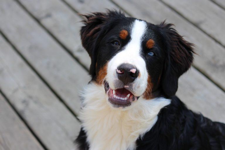 Unerwünschtem Verhalten richtig begegnen - Hundefälle