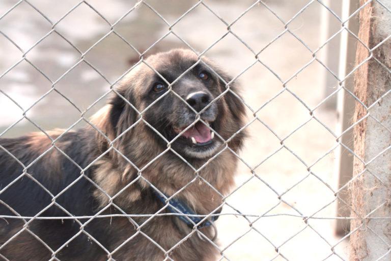 Hundefälle - Tierschutzhunde und aversives Training