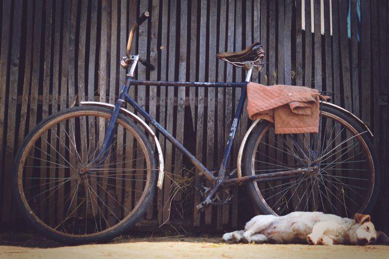 Joggen, Fahrrad fahren, Inline Skaten – artgerechte Hundebeschäftigung?